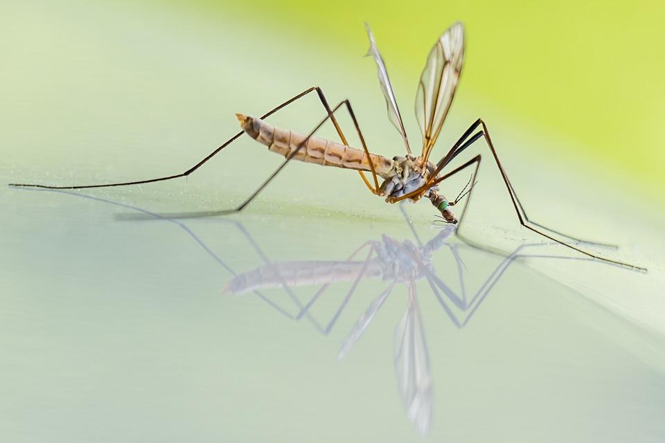 Foto di una zanzara